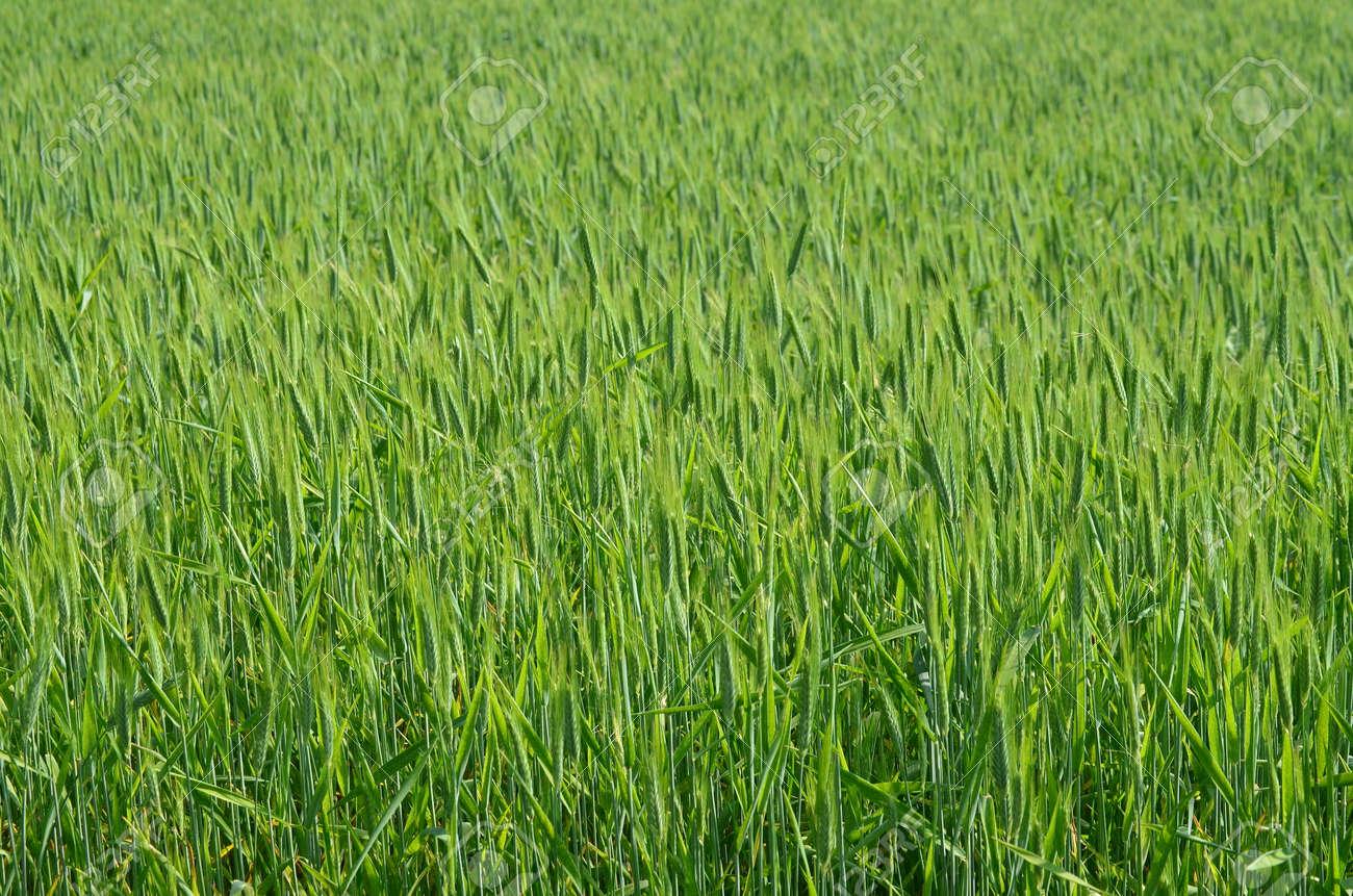 view of sown fields , southern Bohemia . Czech Republic Stock Photo - 80582494