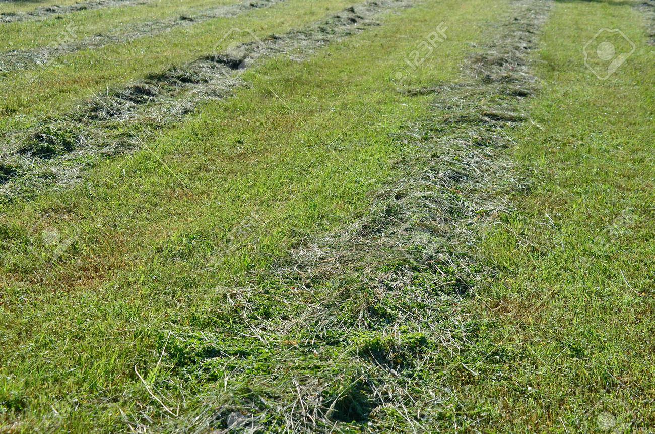 Traditional dry grass, South Bohemia. czech republik Stock Photo - 80507109