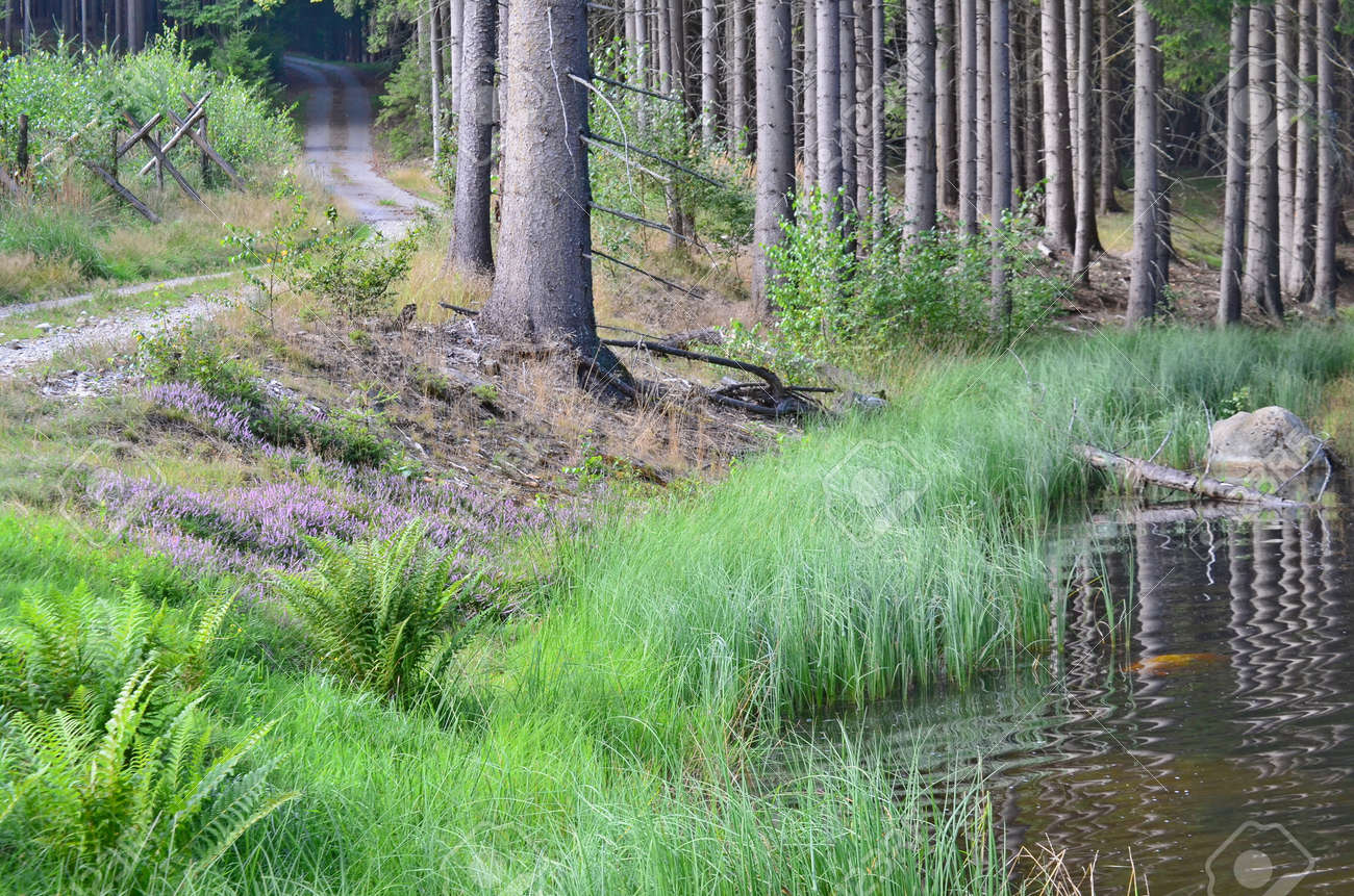 view of the forest landscape. South Bohemia Stock Photo - 85611599