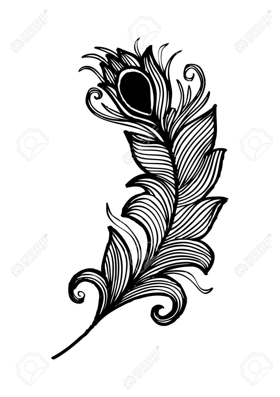 Beauty peacock feather Hand drawing illustration