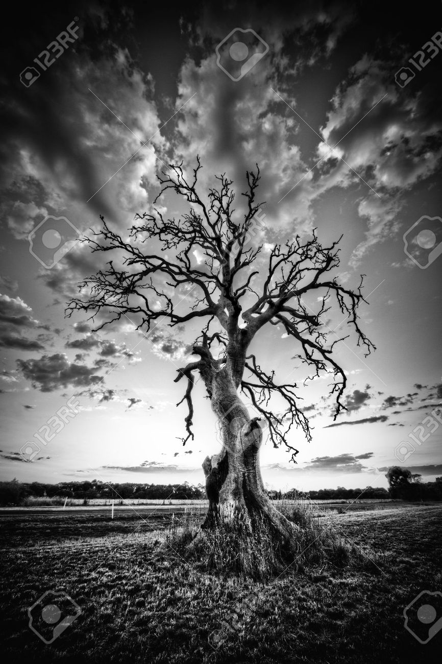 Alone dead tree on country highway in black and white