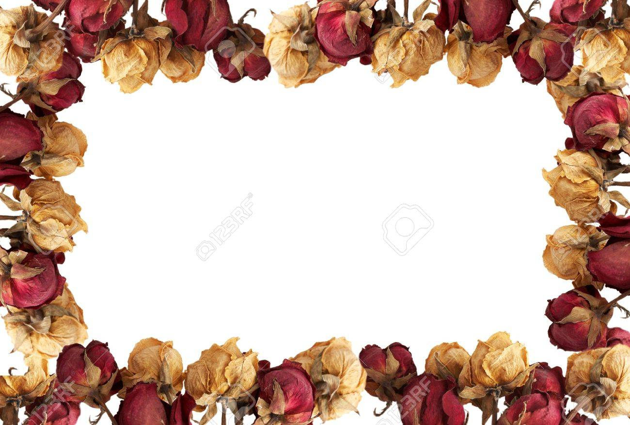 Empty picture frame ( from dry roses) Stock Photo - 4776213