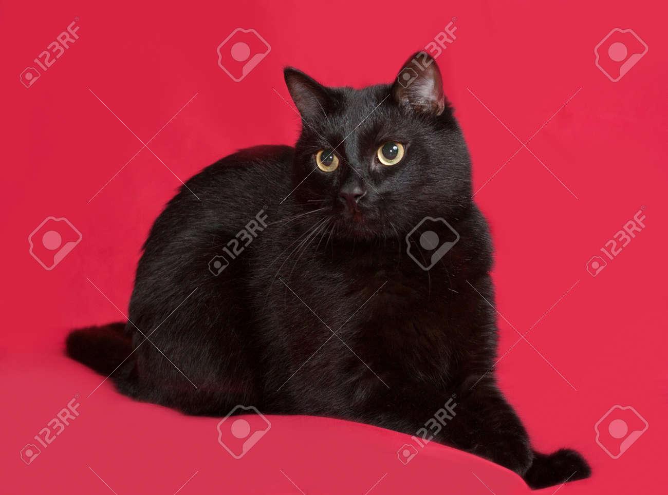 Immagini Stock Gatto Nero Seduto Su Sfondo Rosso Image 43371067