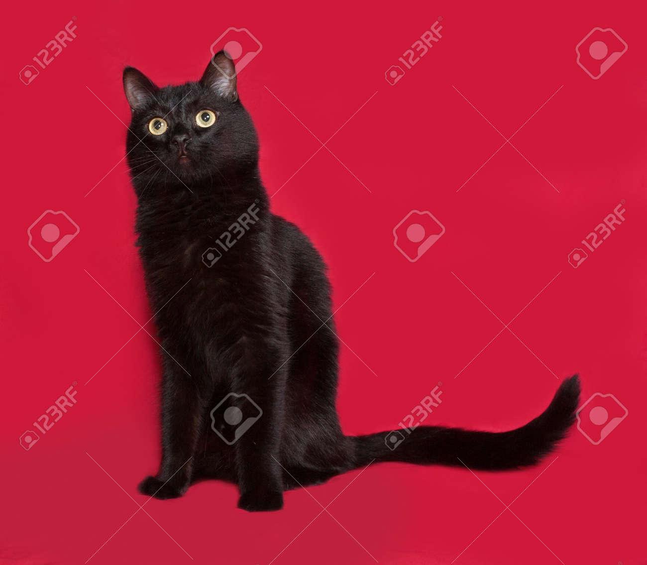Immagini Stock Gatto Nero Seduto Su Sfondo Rosso Image 43692034