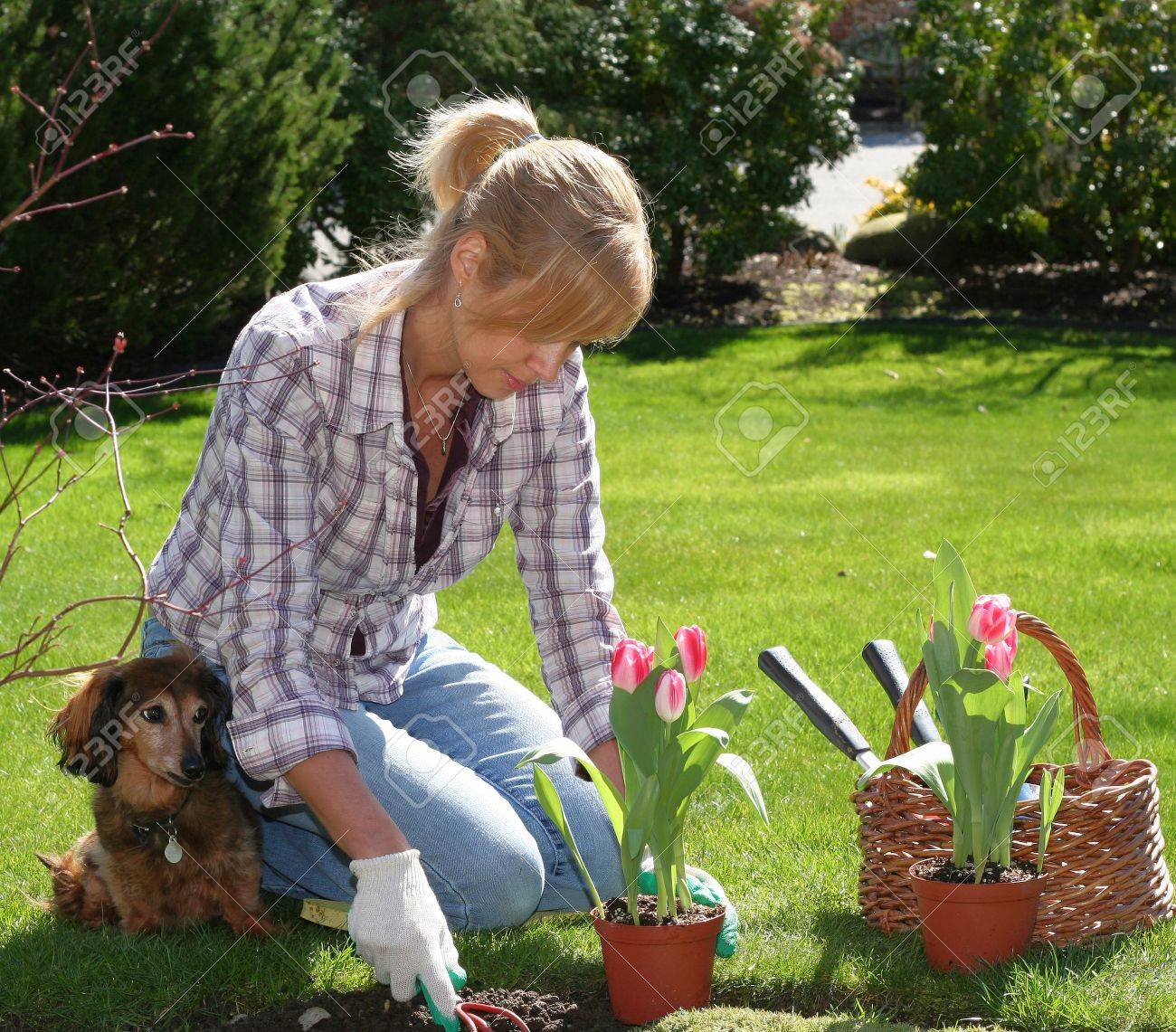 Garden Design With Pretty Blond Woman Enjoying Gardening Outside In Spring.  Stock With How To