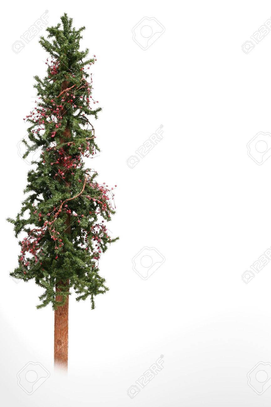 Skinny Christmas Tree.Skinny Christmas Tree Isolated On White