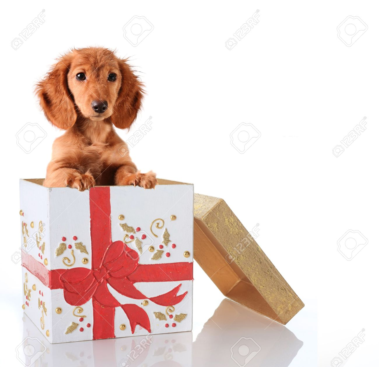 Christmas Puppy In A Gift Box. Stock Photo, Picture And Royalty ...