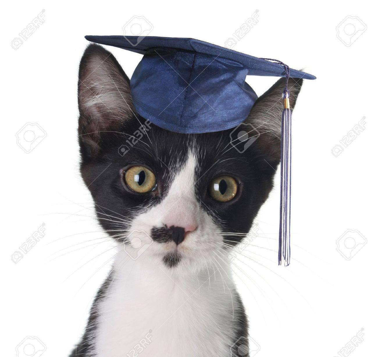 Smart cat Stock Photo - 6200466