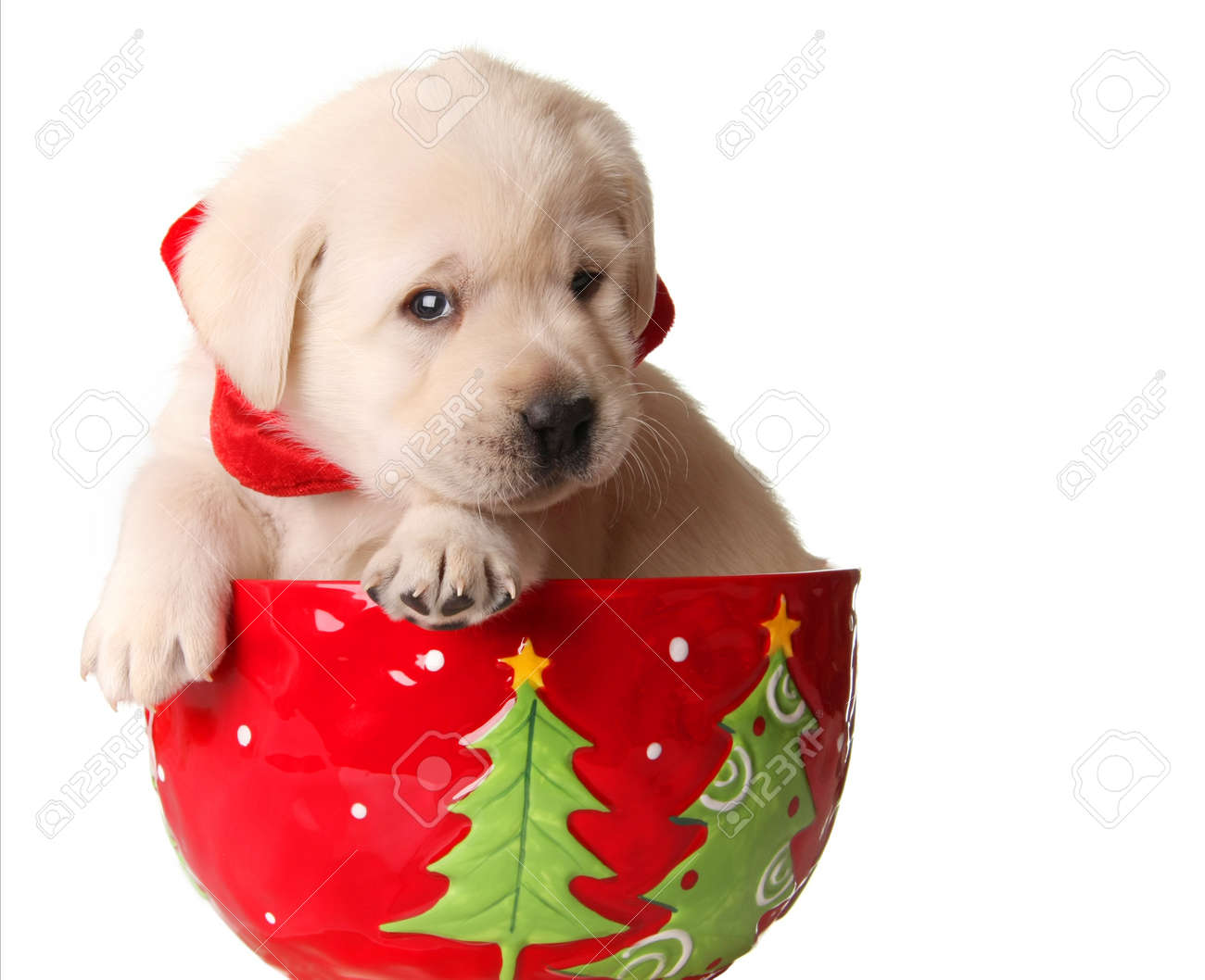 Yellow Labrador Puppy In A Christmas Mug Stock Photo Picture And Royalty Free Image Image 11476673