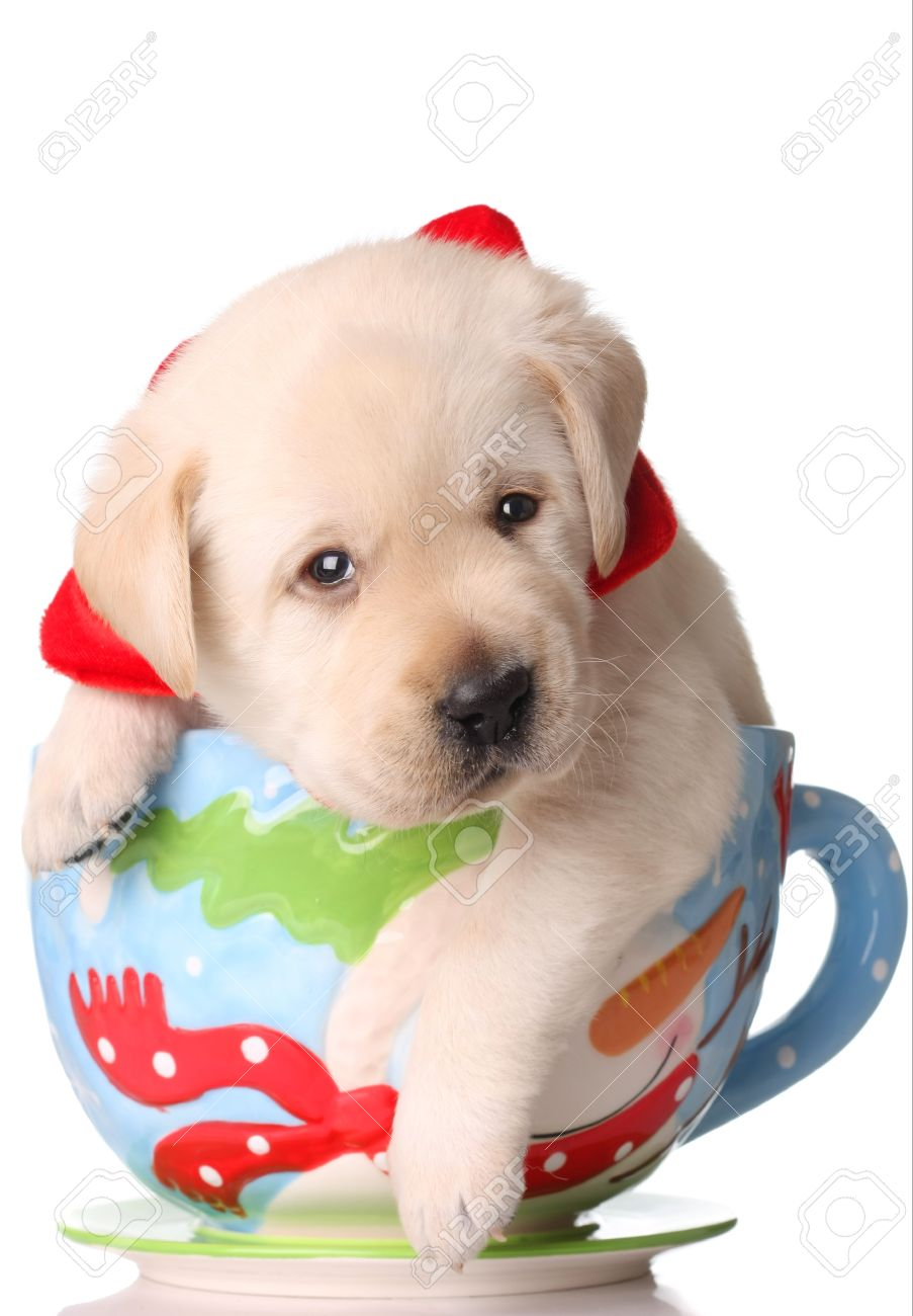 Yellow Labrador Puppy In A Christmas Mug. Stock Photo, Picture And ...