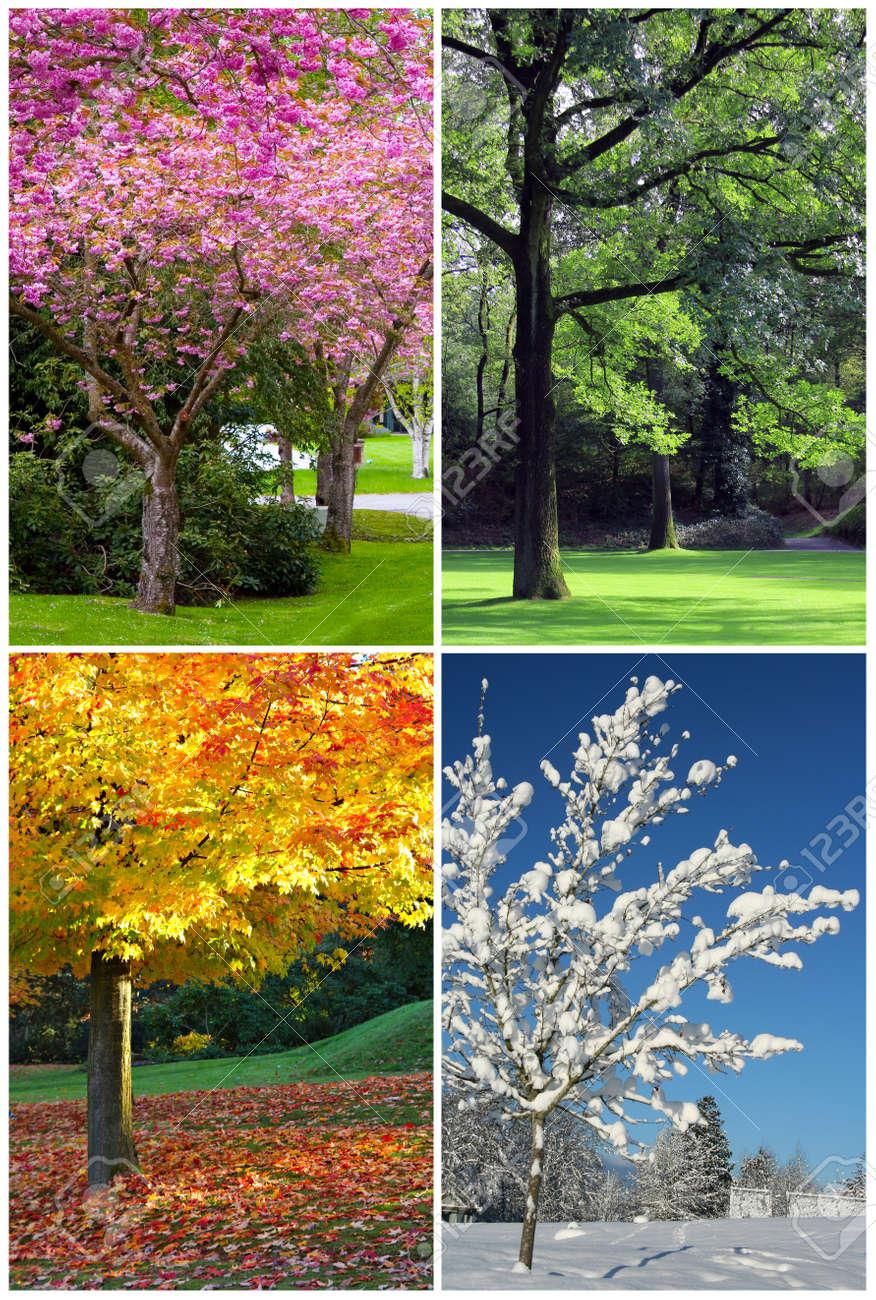 Vier Jahreszeiten Collage Fruhling Sommer Herbst Winter