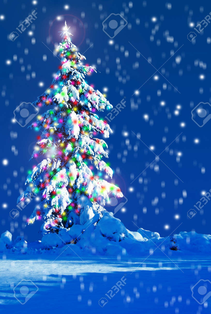 snow covered christmas tree outside at night stock photo 15422508 - Snow Covered Christmas Trees