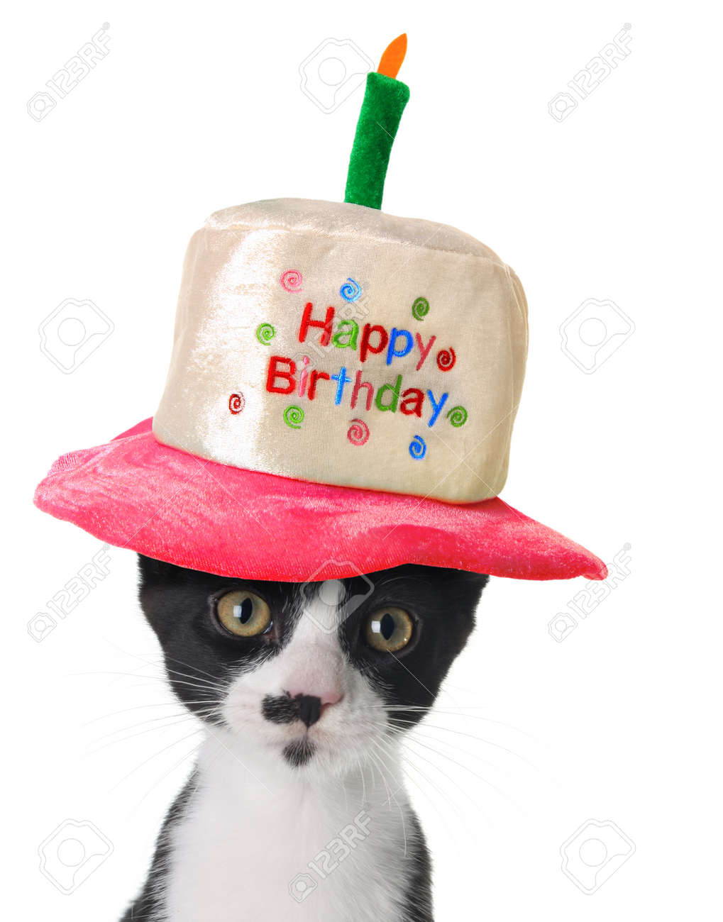 kitten wearing a happy birthday hat stock photo picture and