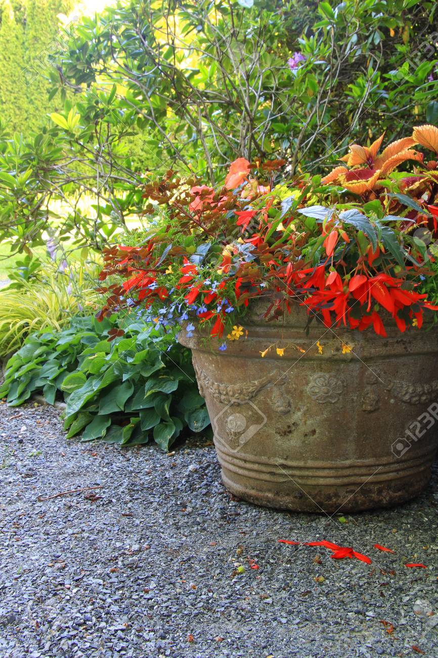 Beautiful Shade Planter Filled With Trailing Begonias And Lobelia Stock Photo Picture And Royalty Free Image Image 29458636