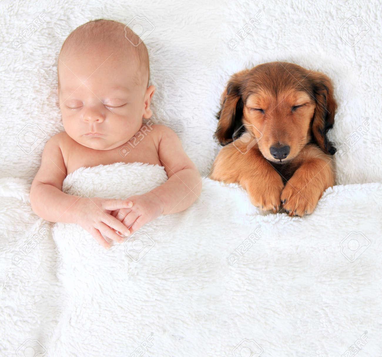 Duerme El Niño Recién Nacido Junto A Un Cachorro De Perro Salchicha ...