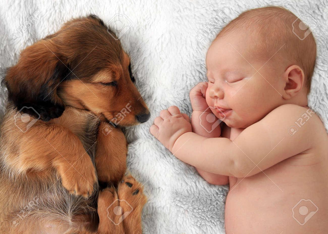 Newborn baby girl  and dachshund puppy asleep on a white blanket. Stock Photo - 43041676