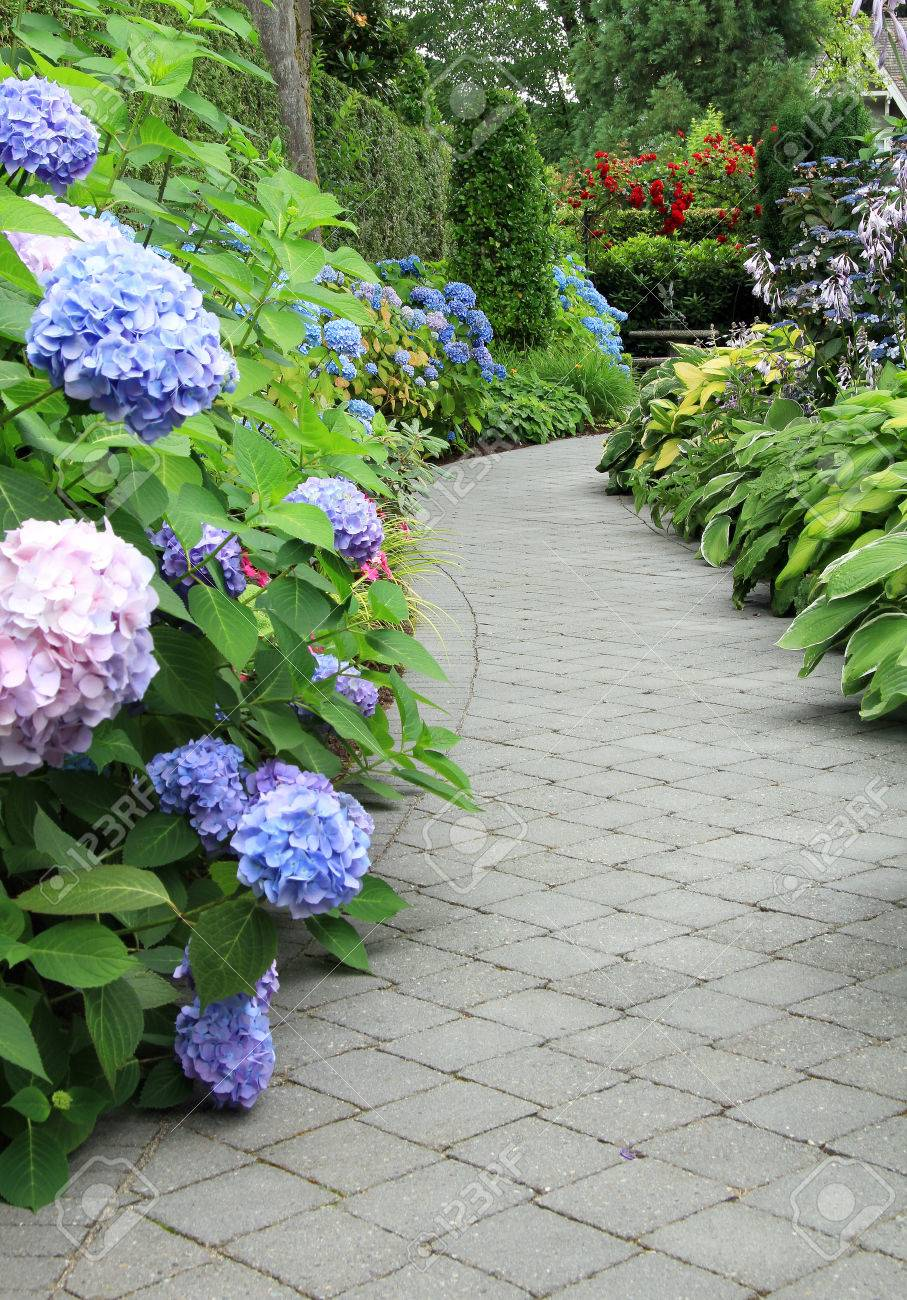 Beautiful Shaded Garden Path Lined With Hydrangea And Hosta Stock