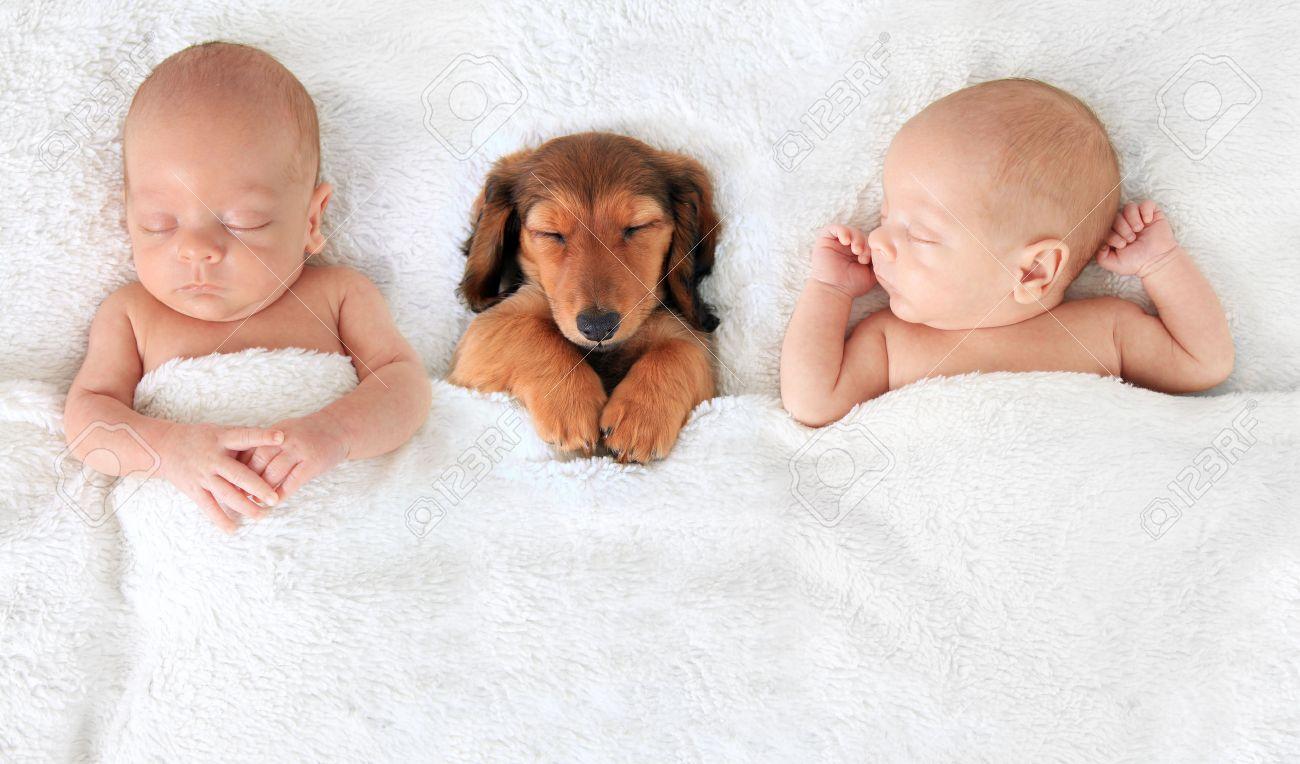 ダックスフンド 赤ちゃん 画像