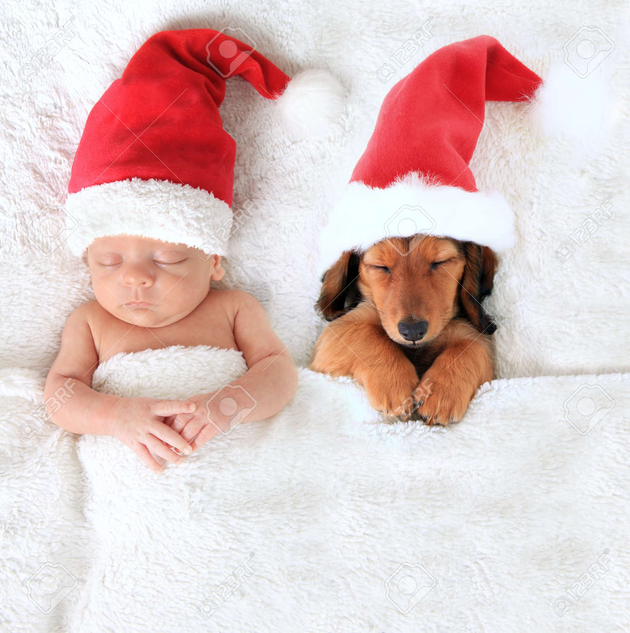 Newborn Christmas Pictures.Sleeping Newborn Christmas Baby Alongside A Dachshund Puppy Wearing