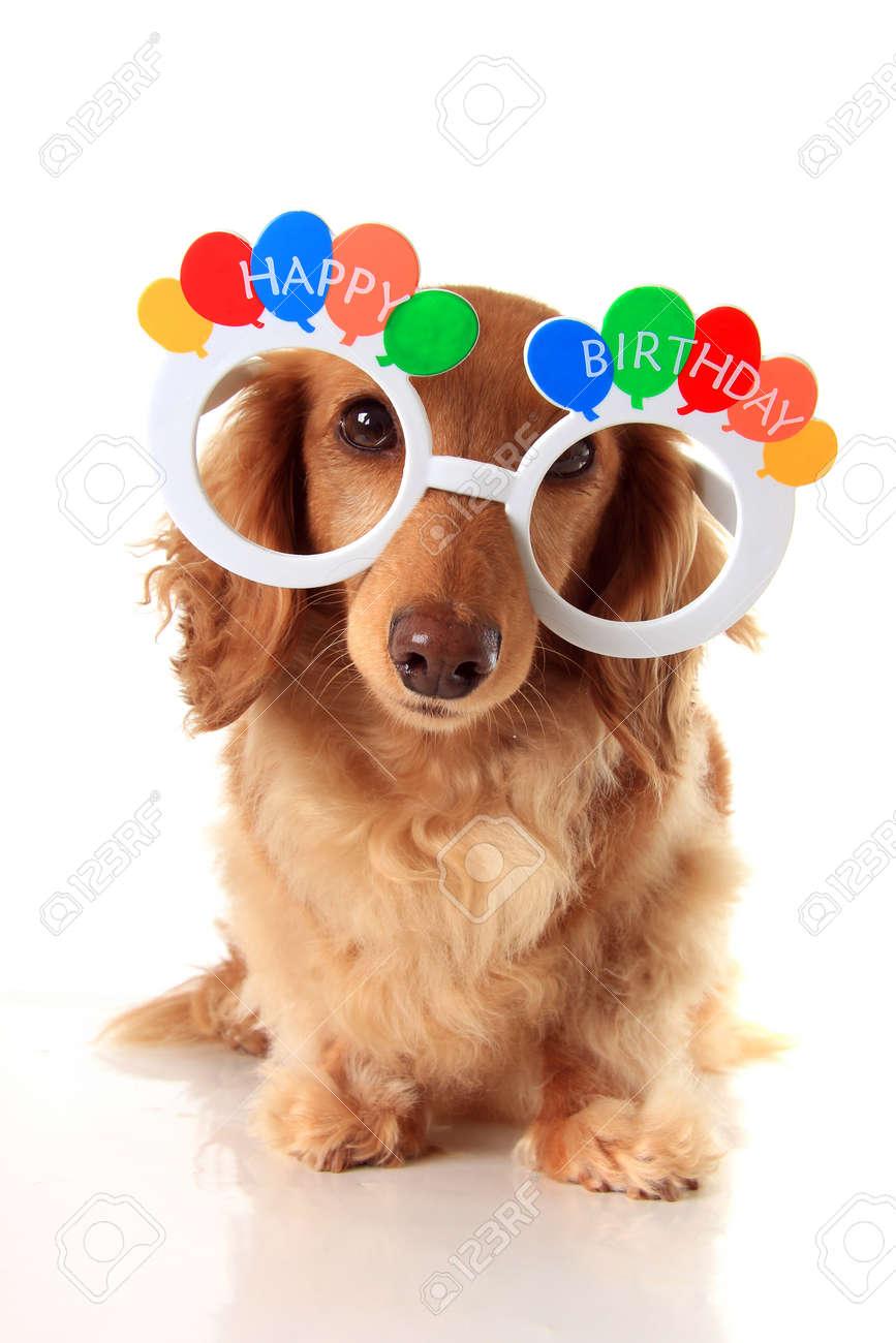 Dackel Welpen Brille Alles Gute Zum Geburtstag Zu Tragen Auch