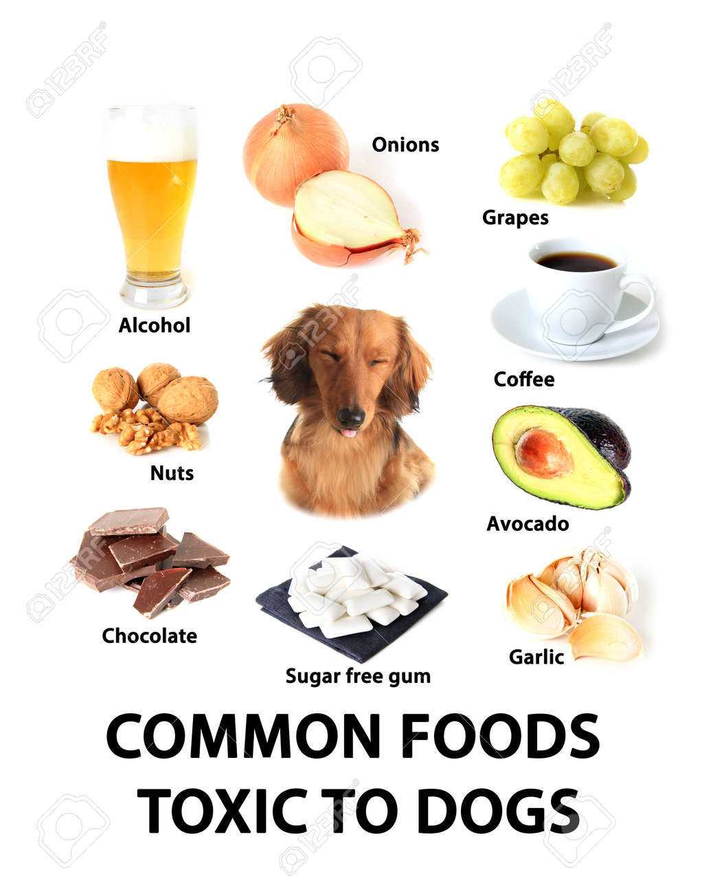 Chart Of Toxic Foods For Dogs. Stock Photo, Picture And Royalty ...