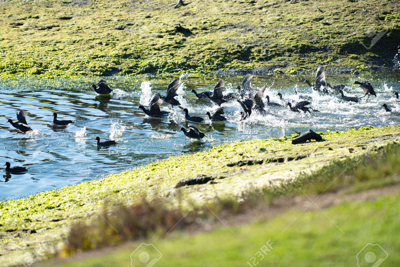 Bird in the water. Incredibly beautiful nature. - 163345453