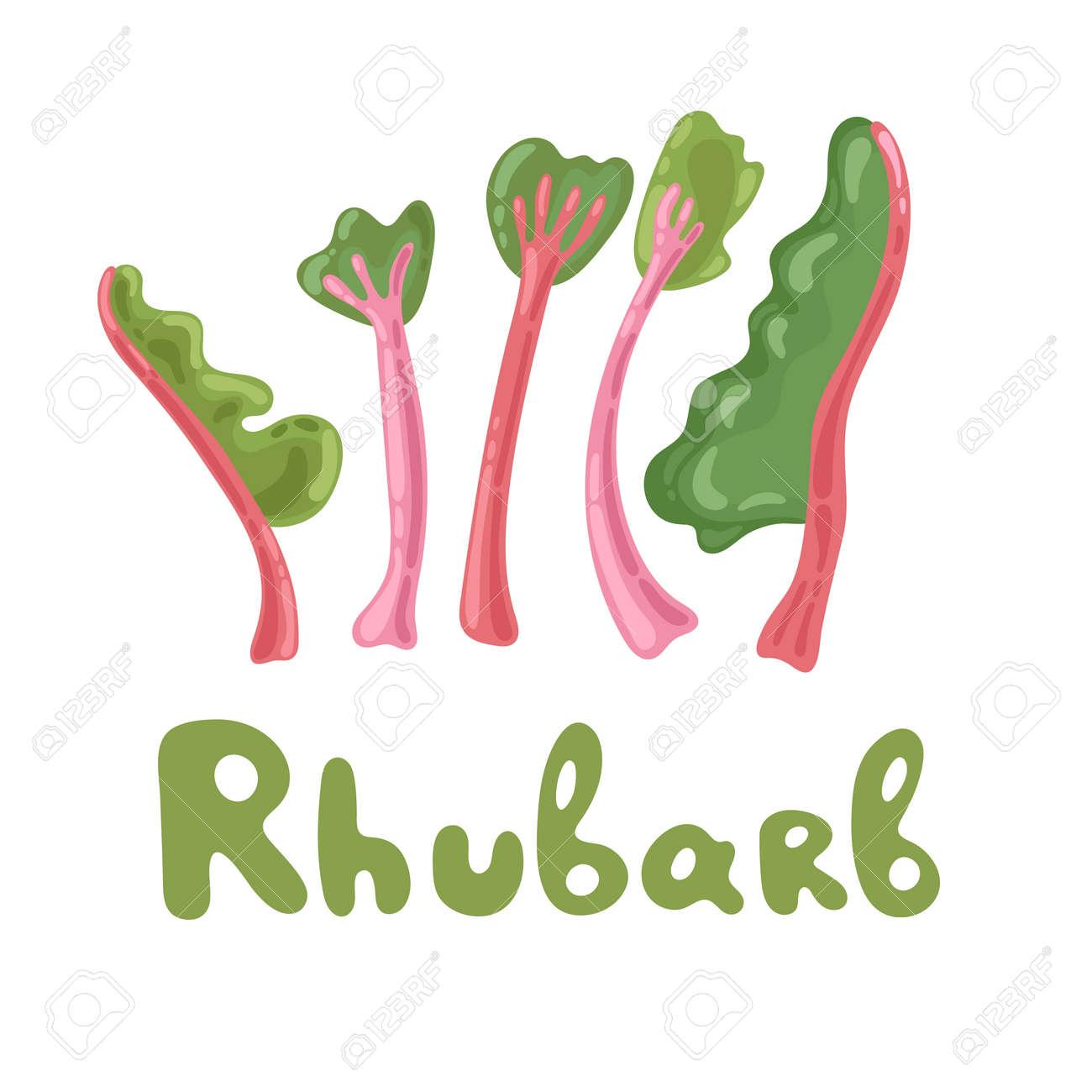 Rhubarb vector set isolated - 151366500