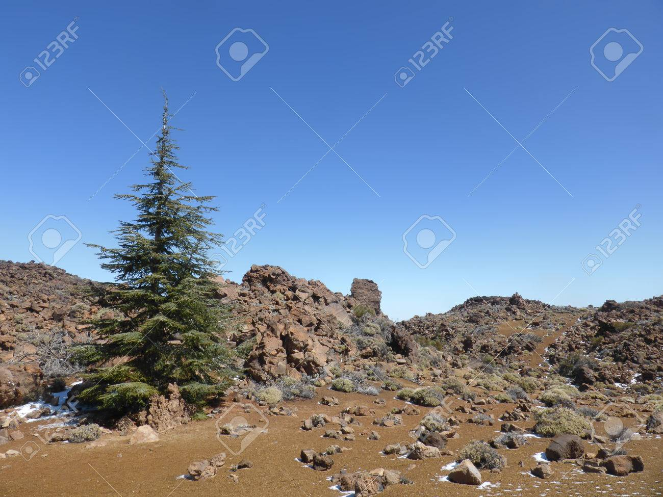 Christmas Tree In The Desert.Christmas Tree In Desert Landscape Mountain Landscape