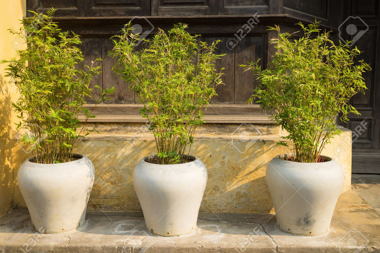 Three Decorative Bamboo Tree Pots In Front Of Old House Stock