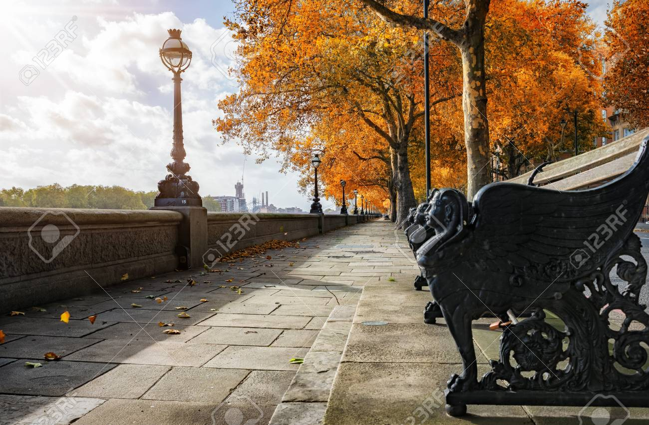 London During Autumn Time Chelsea Embankment With Golden Trees Stock Photo Picture And Royalty Free Image Image 95041685