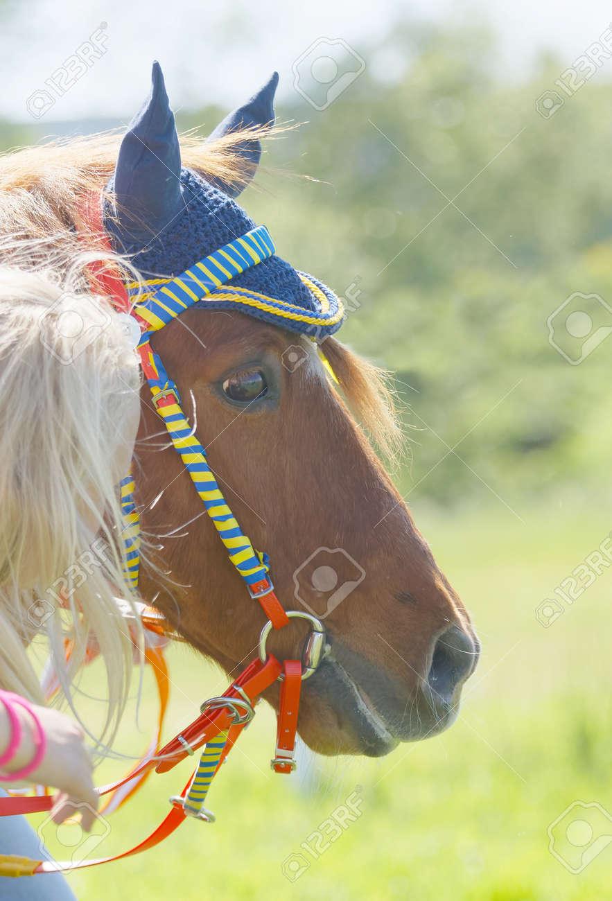 ストックホルム スウェーデン 2017 年 6 月 6 日 Gardetnationaldags Galoppen でかわいいポニー ギャロップ競走馬の頭のクローズ アップ2017 年 6 月 6 日ストックホルムスウェーデン