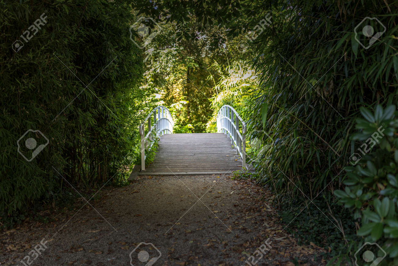 Bruecke Im Bambus Garten Stock Photo Picture And Royalty Free Image