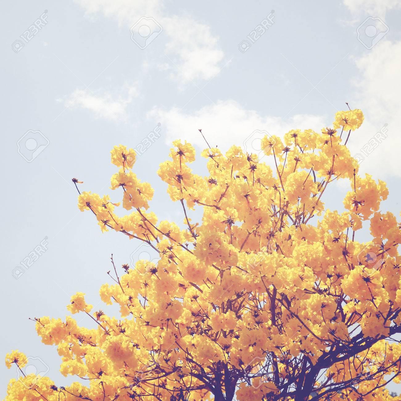 Fleur Jaune Sur Le Haut De L Arbre Avec Effet De Filtre Retro Banque