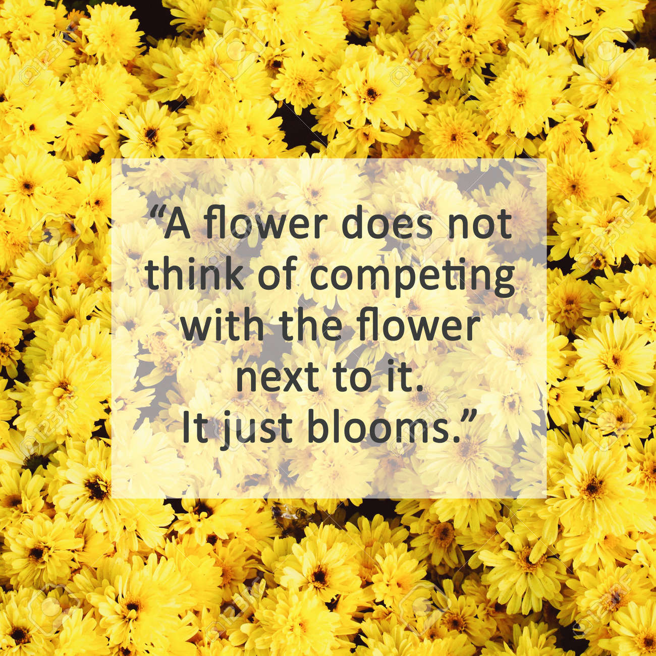 Inspirational Quote On Yellow Blossom Flowers With Retro Filter Stock Photo Picture And Royalty Free Image Image 39077413