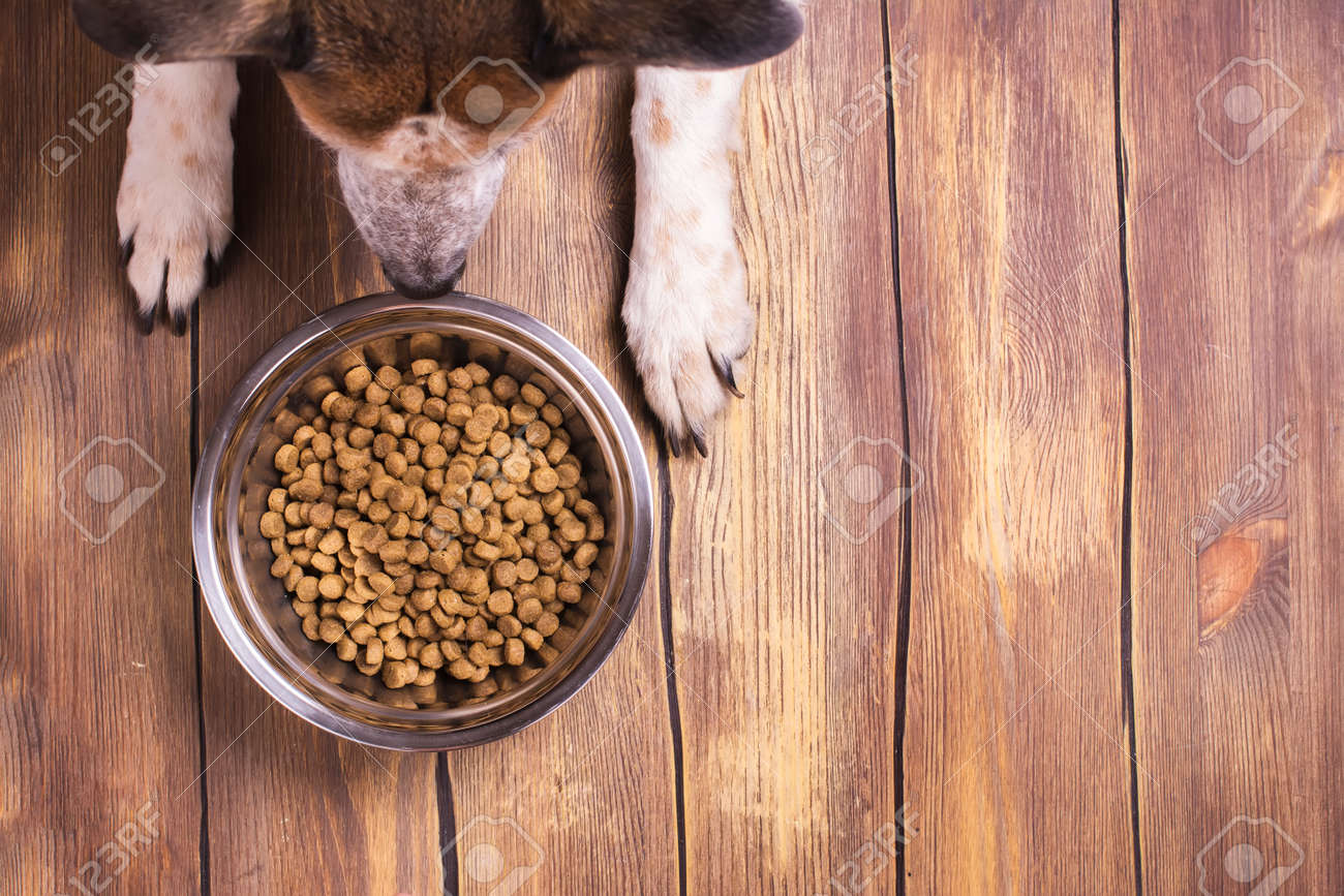 Bowl of dry kibble dog food and dog's paws and neb over grunge wooden floor - 57183558