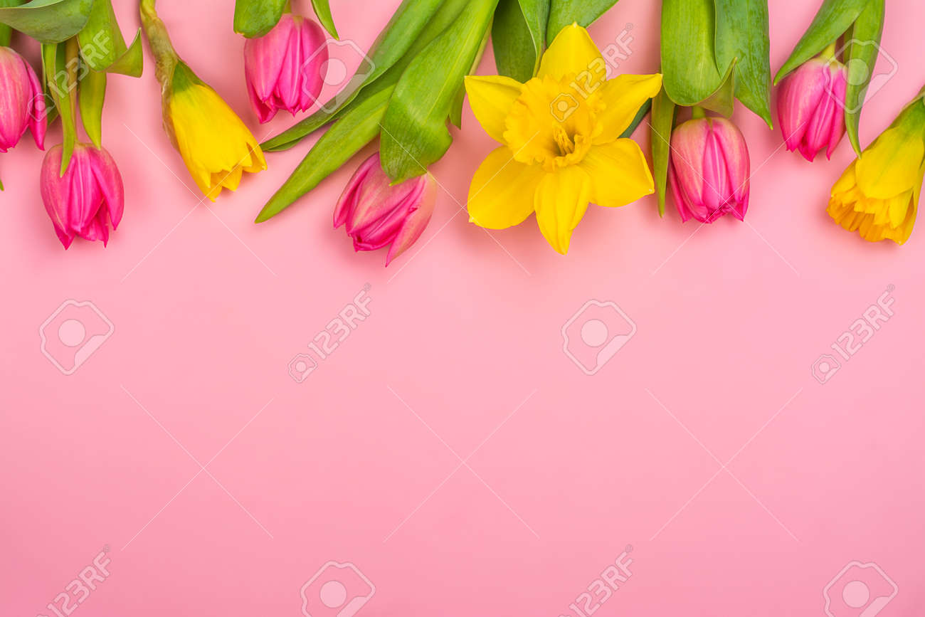 Yellow daffodils and pink tulips - 163373353