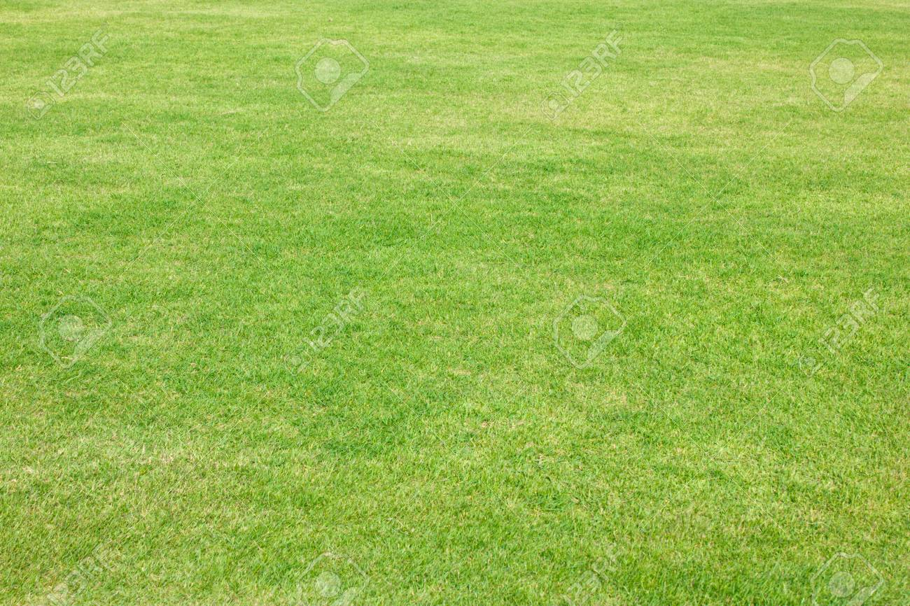 Green grass of football field Stock Photo - 16465297