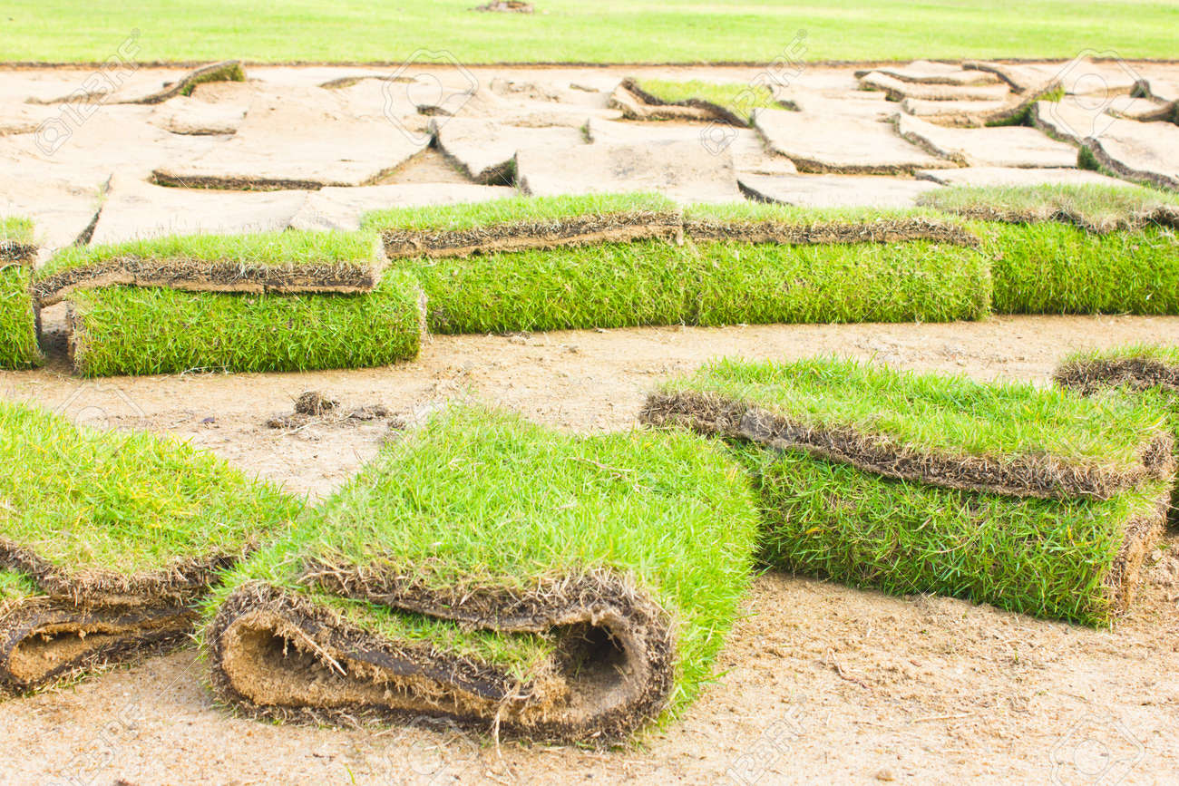 Rolls of green grass, laying in progress Stock Photo - 16482614