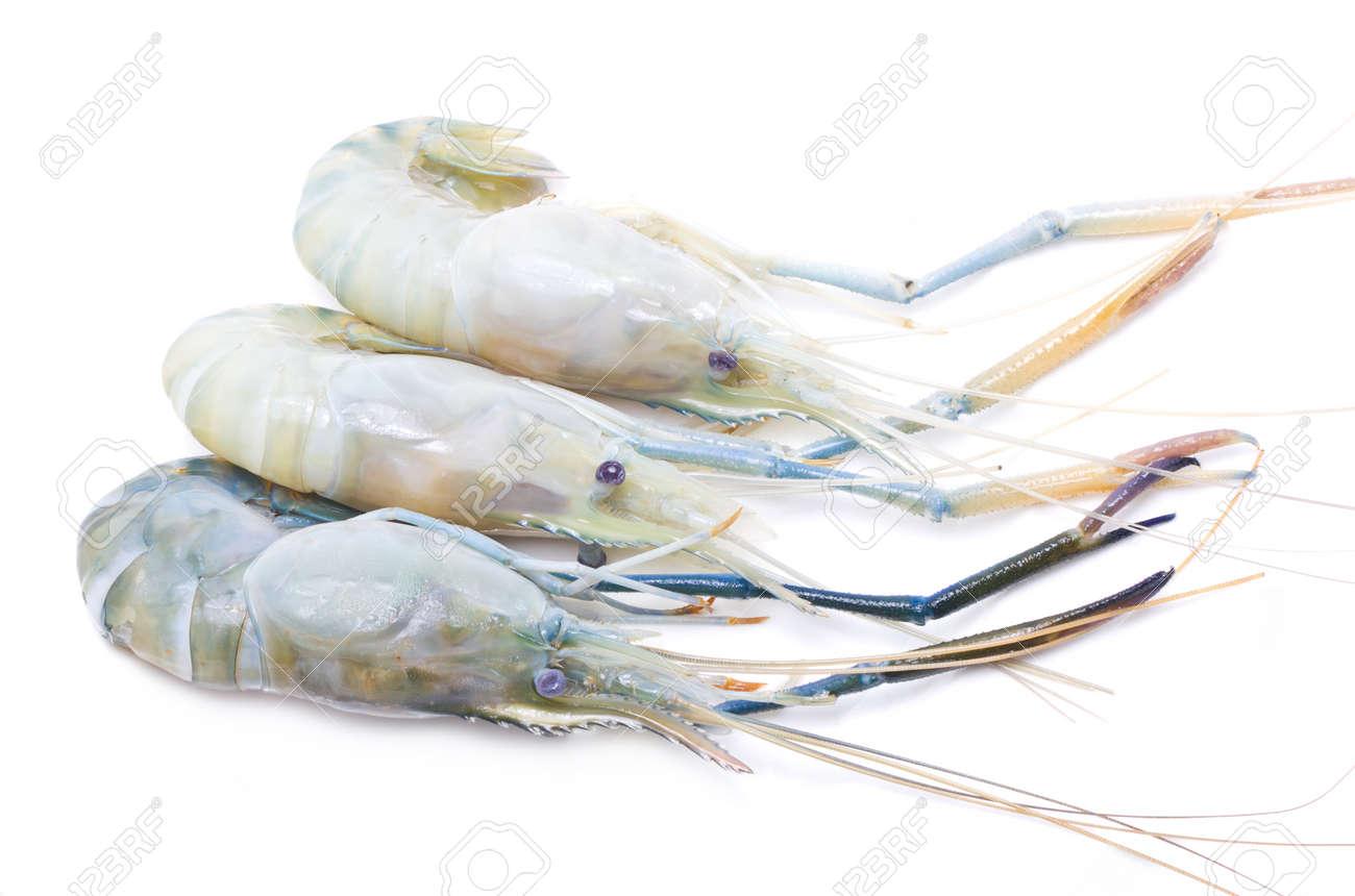 Fresh river shrimp isolated on white Stock Photo - 20441773