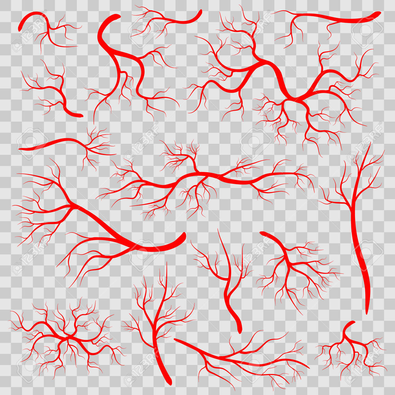 Creative vector illustration of red veins isolated on background. Human vessel, health arteries, Art design. Abstract concept graphic element capillaries. Blood system - 101249224