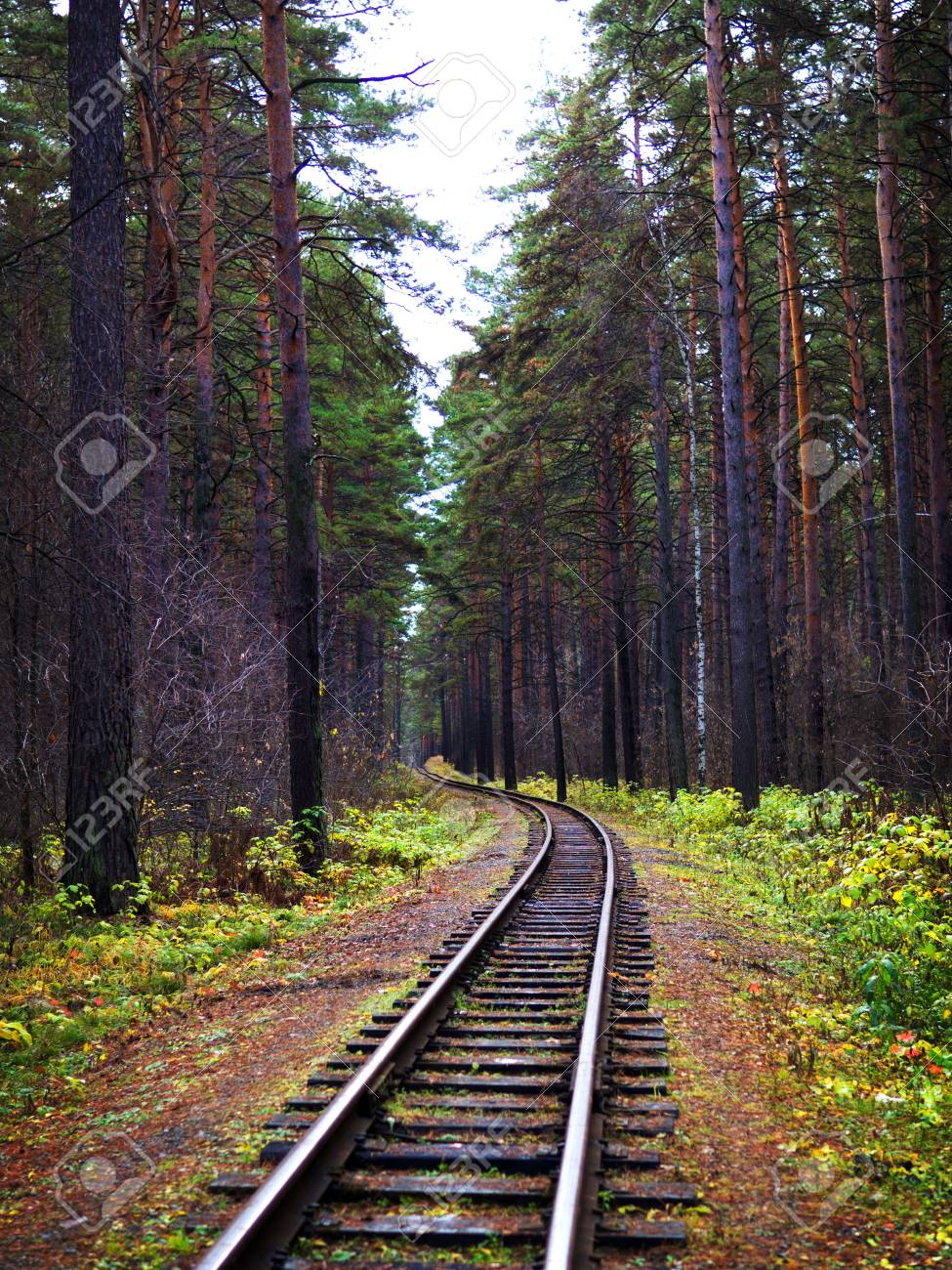 View along the railway. Game of summer and autumn colors. Tall trees. - 89517194