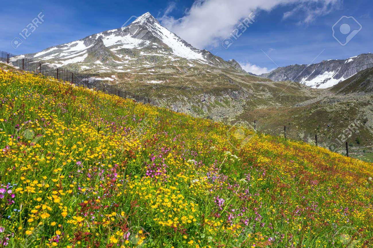Schöne Blumenwiese In Der Italienischen Alpen Europa Lizenzfreie