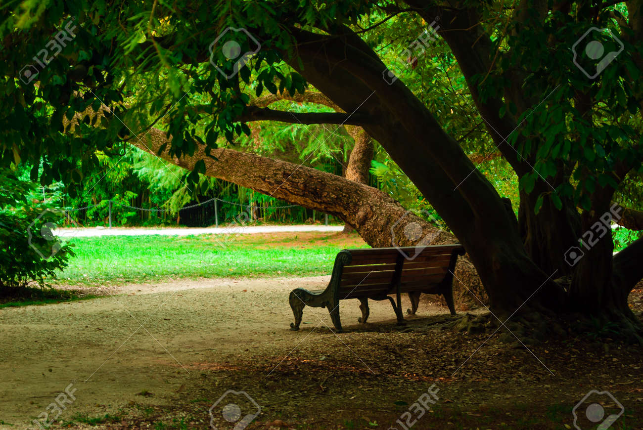 Heavy Duty Counter Stools, Garden Bench In The Shade Of An Old Tree In The Park Stock Photo Picture And Royalty Free Image Image 114027507