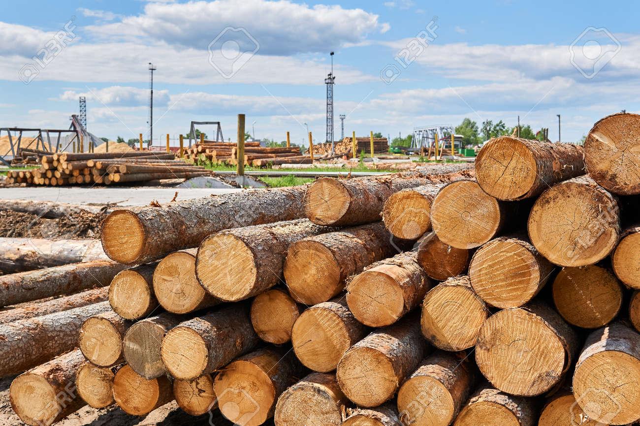 stacks of unbarked logs in a vast lumber yard - 151609715