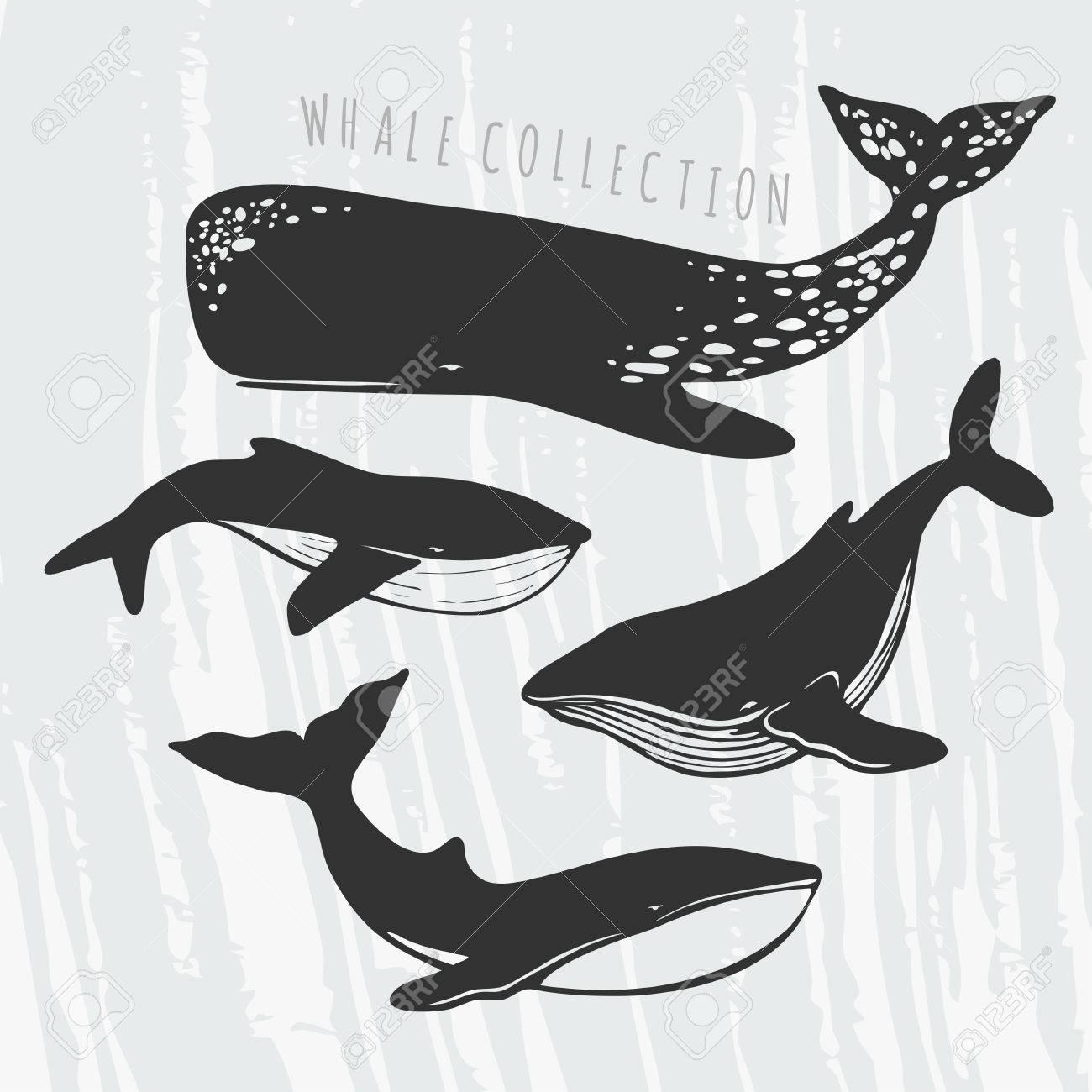 Illustration Der Verschiedenen Wale: Cachalot, Orca, Große Blauwal ...