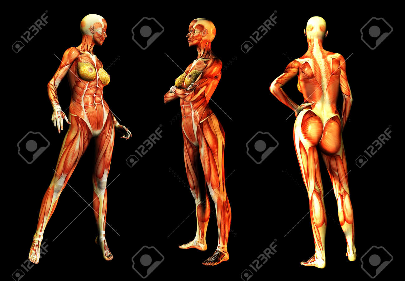Medical Image Of Some Women In Poses Without Skin. Stock Photo ...