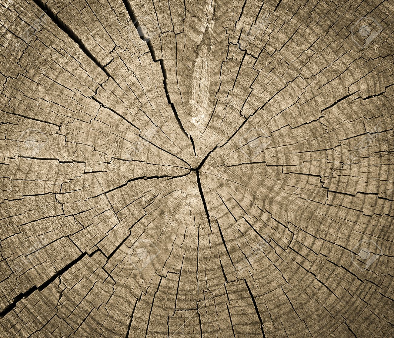 cross section of tree trunk showing growth rings texture background