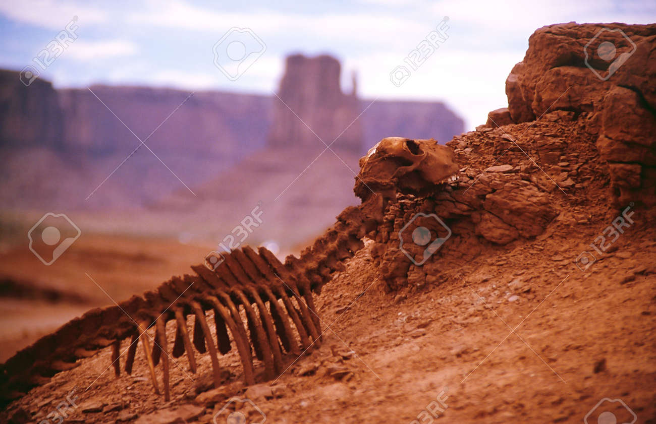 Death Of The Animal In A Hot Desert Of America Stock Photo - A hot desert