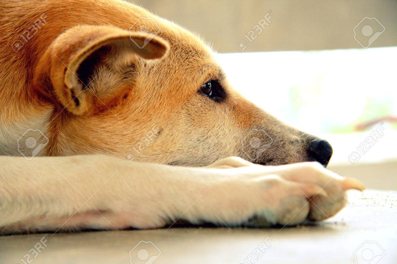 Stray dog living alone Stock Photo - 23264726