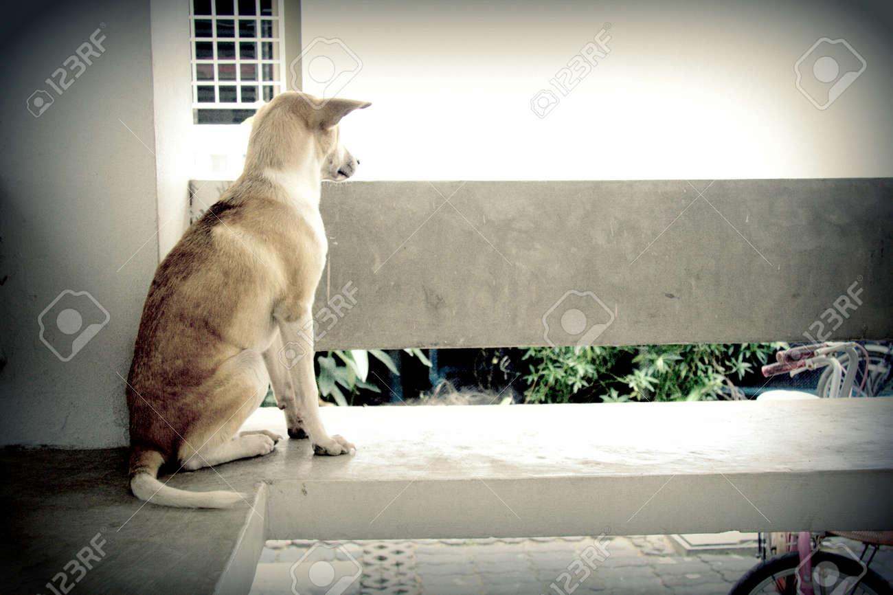 Stray dog living alone Stock Photo - 23264745